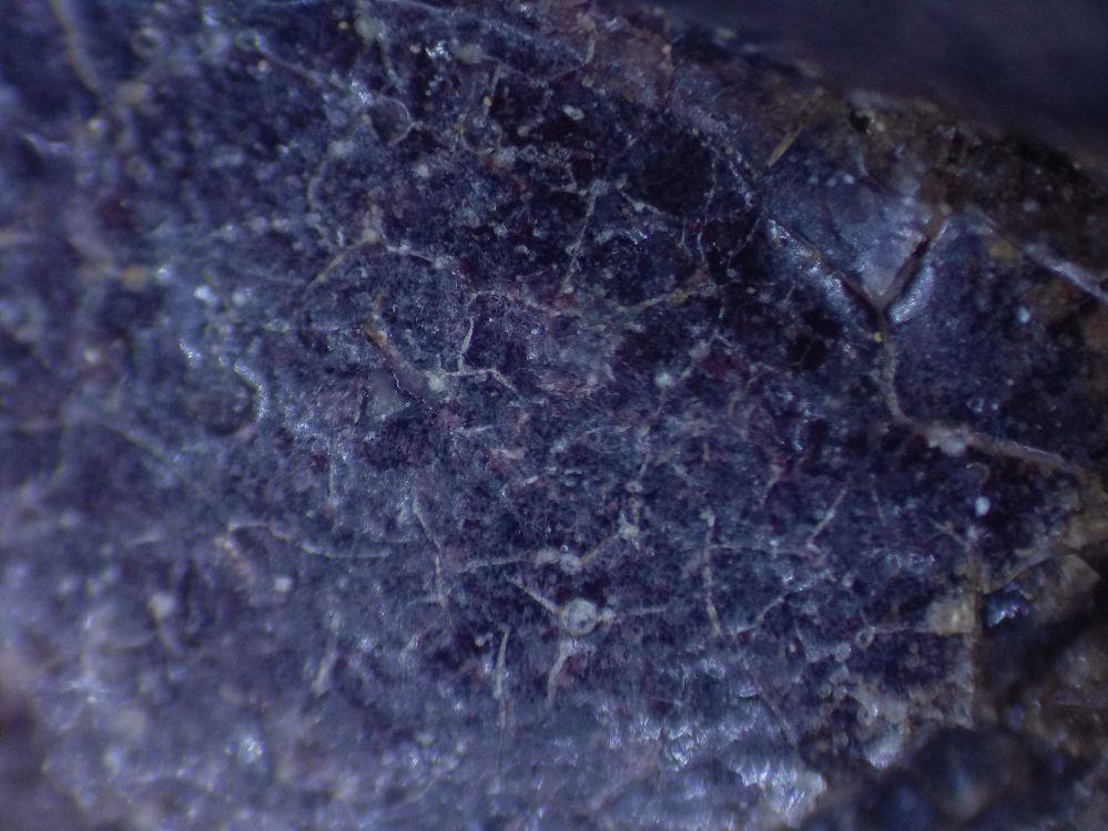 微觀鑑定樹枝狀